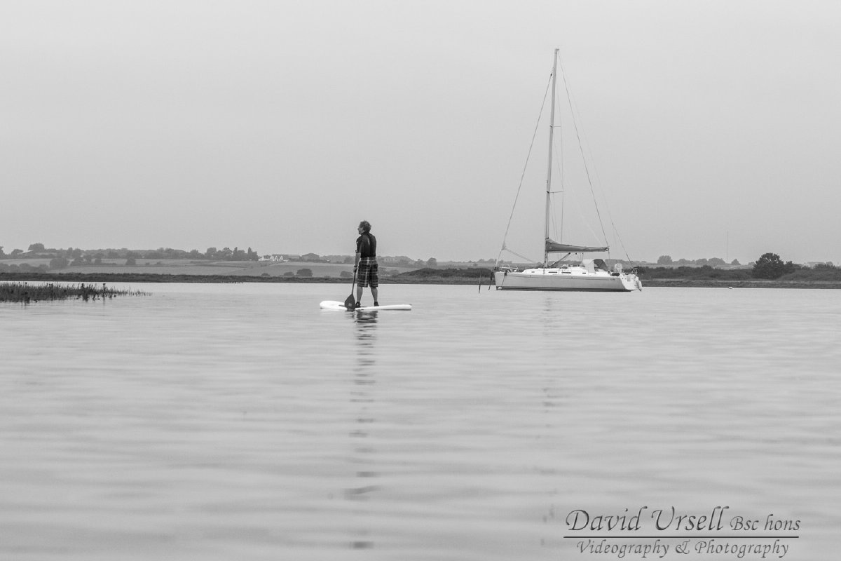 stand up paddle boarding experience with seals in essex